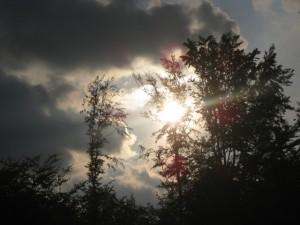 Die Sonne Baum